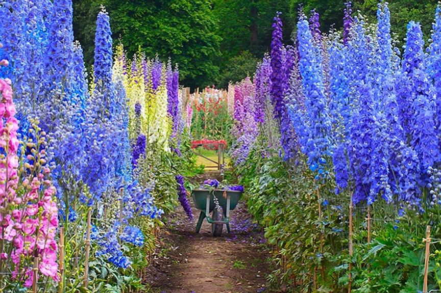 delphinium-garden