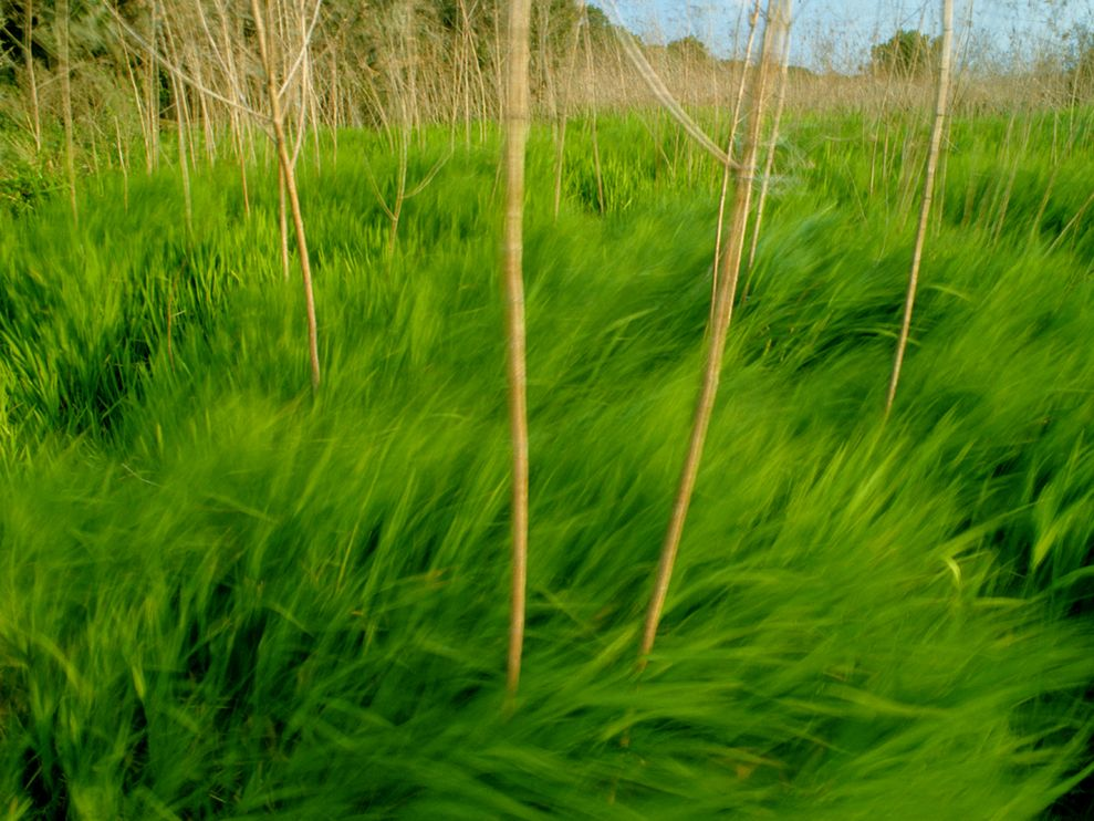 green-grass-gehman_1424_990x742
