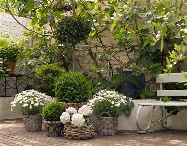 all-hands-deck-easy-garden-design-ideas-exclusives-from-msn-113048