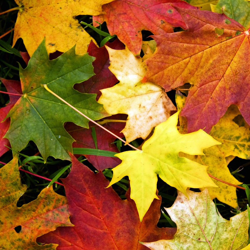 freeios7.com_apple_wallpaper_autumn-leaves-fall_ipad_retina_parallax
